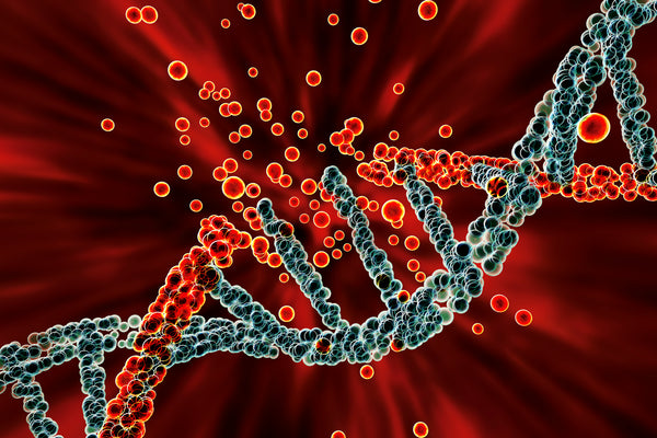 Cellular senescence causes DNA damage and aging