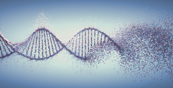 DNA damage can accelerate biological aging