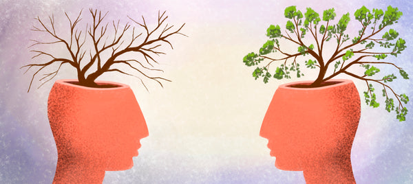 Impairment in dendrite growth and arborization — when neurons form new dendritic trees and branches to create new connections — are cardinal features of memory loss in neurodegenerative diseases.