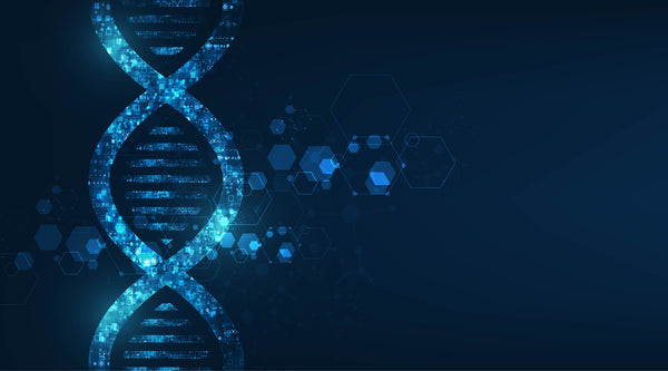 By analyzing DNA methylation patterns, DeepMAge can estimate human age within a 3-year error margin, which is more accurate than any other human aging clock.