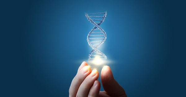 DNA provides the code for making proteins, which carry out many functions in the cells of our body