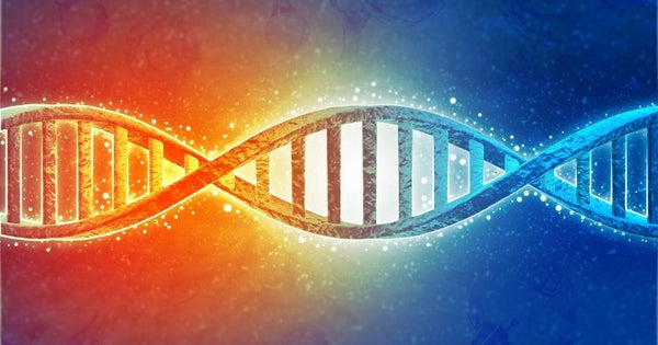 DNA is susceptible to damage.