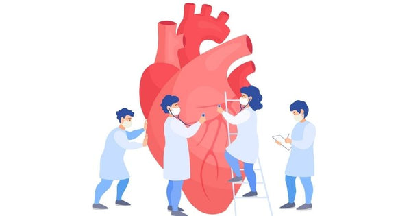 How Sirtuins Support Heart Health
