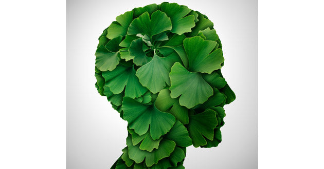 Ginkgo biloba has been long-associated with enhanced cognitive ability.