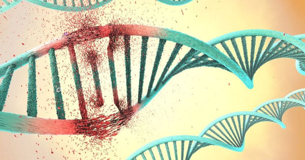 Genes change and get activated differently throughout the lifespan