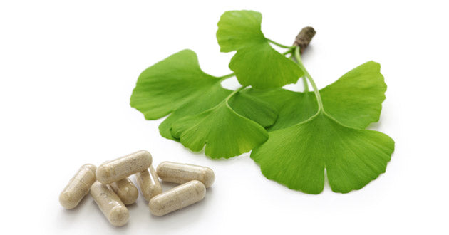 The leaves of the Ginkgo biloba tree have long been associated with enhanced cognition