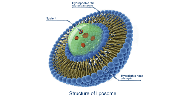 Glutathione held within a liposome makes it highly bioavailable.