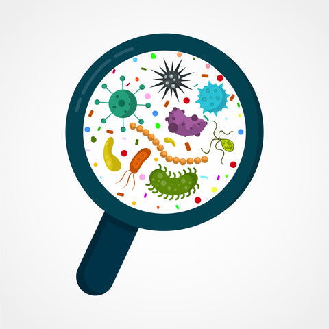 Gut Dysbiosis Increases the Risk of Mortality