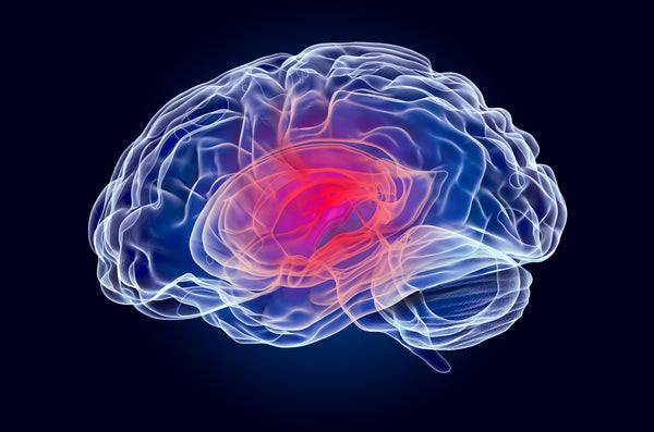 cognitive decline is caused by neuroinflammation and oxidative stress