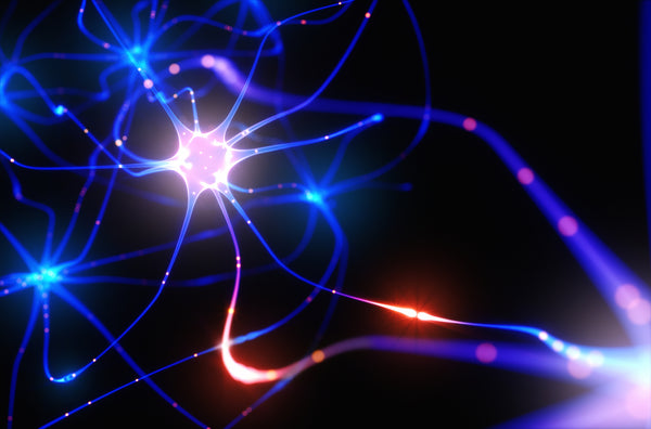 Neurogenesis is a subset of brain health referred to as plasticity, or the adult brain's ability to adapt, change its structure, and rewire connections called synapses in response to new experiences