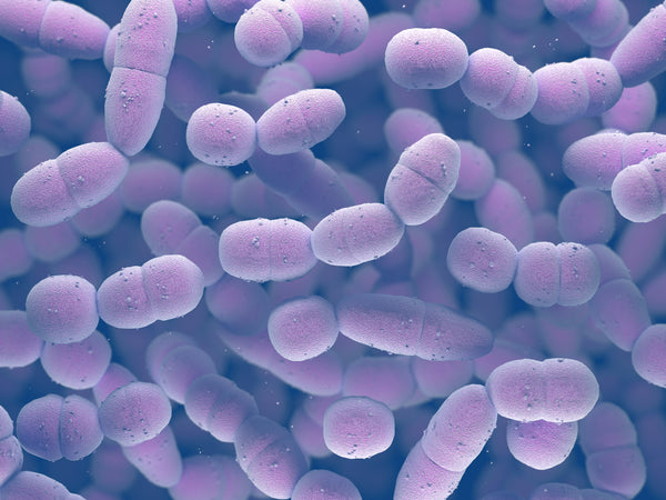 "secretions from specific Streptococcus bacteria, from the same family that can cause ""strep throat"", on human skin, there were marked improvements in skin characteristics, such as elasticity, hydration, and peeling"