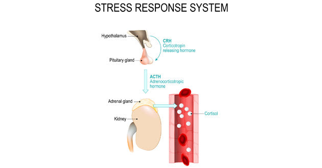 reducing stress is one of Ashwagandha's health benefits
