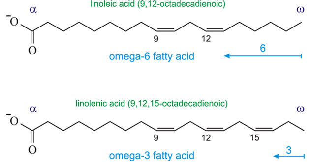 Omega-3 and omega-6 fatty acid structures