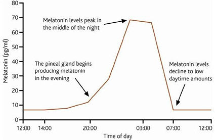 melatonin peaks in the middle of the night