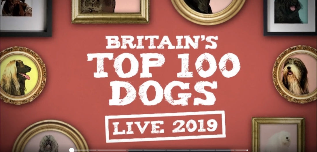Charley Chau featured on ITV: Britain's Top 100 Dogs Live!