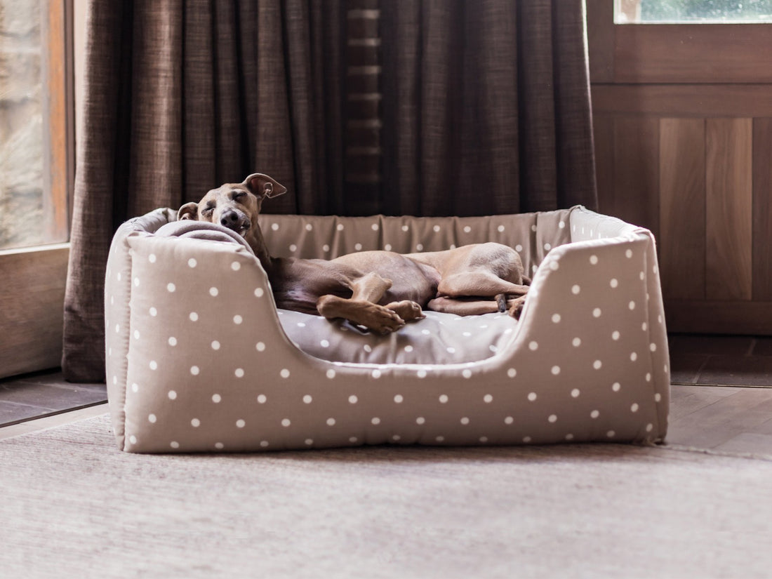 Cool and chic – keep your dog comfy this summer!