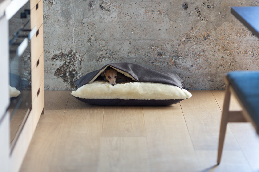 How to Choose the Right Bed for Your Dog and Get the Best Out of Your Purchase