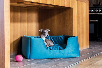 Luxury Dog Beds in Velour