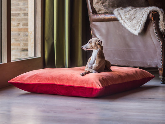 Luxury Dog Bed Mattresses
