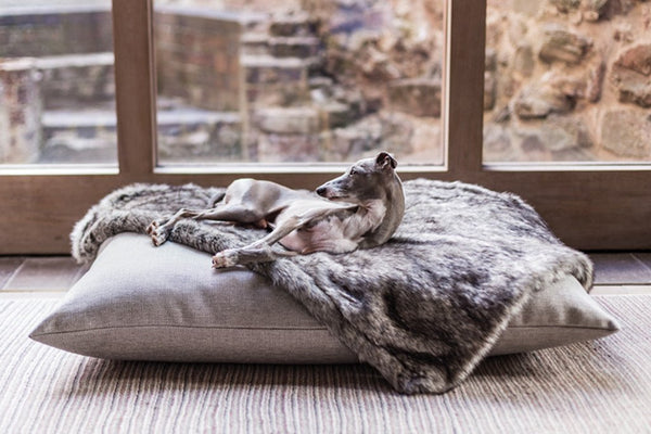 Luxury Dog Beds & Blankets made in England with love