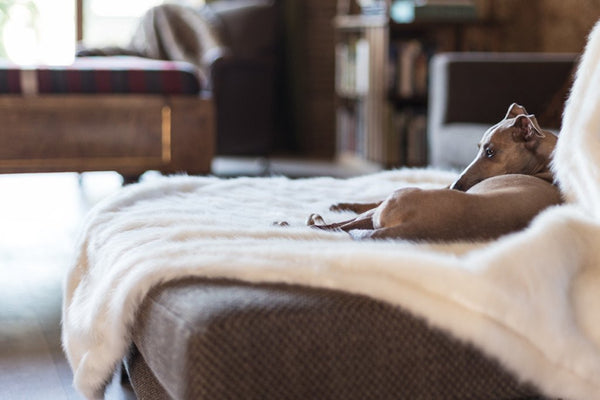 Dog Blankets & Throws