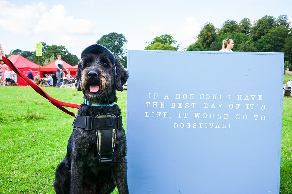Dogstival - the best dog day out ever