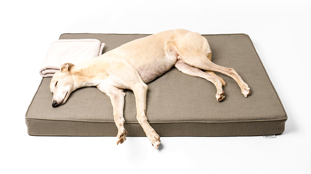Charley Chau Forever Hounds Trust Dog Bed