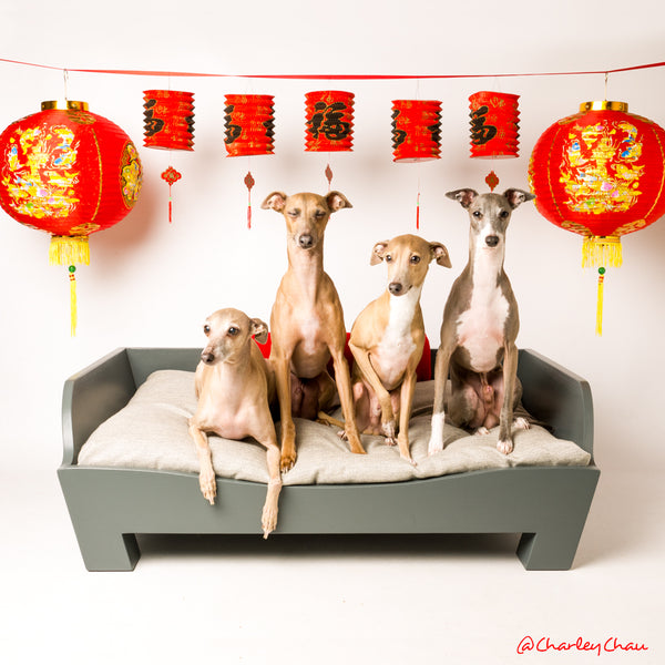 Chinese New Year with the Charley Chau Pack