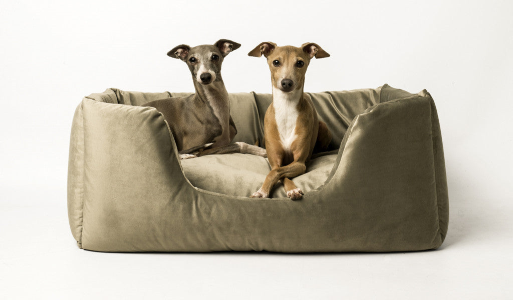Deeply Dishy Dog Bed in Velour Cloud & Silver