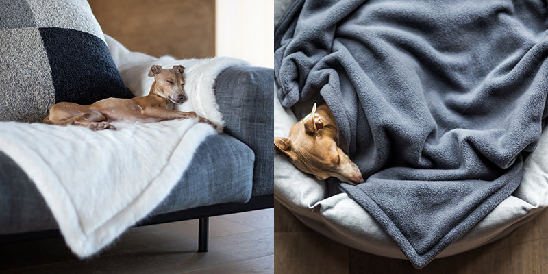 Charley Chau Stylish Dog Blankets
