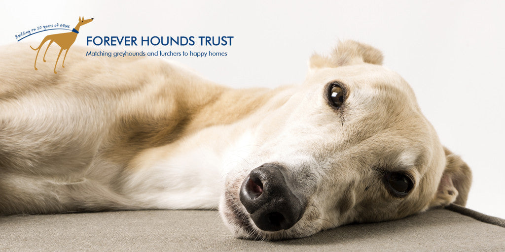 Charley Chau - official charity - Forever Hounds Trust