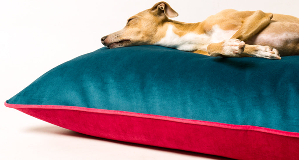 Charley Chau Day Bed in Velour Teal & Fuchsia