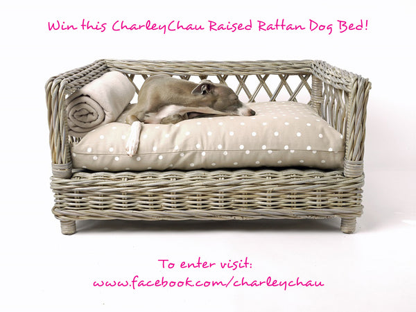 Charley Chau Raised Rattan Dog Bed Prize Draw