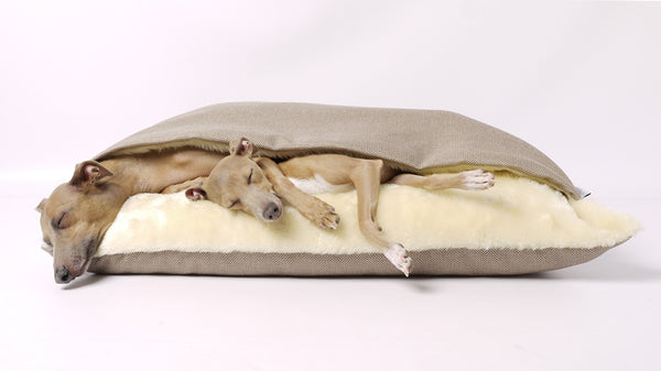 Charley Chau Snuggle Bed - Italian Greyhounds sleeping