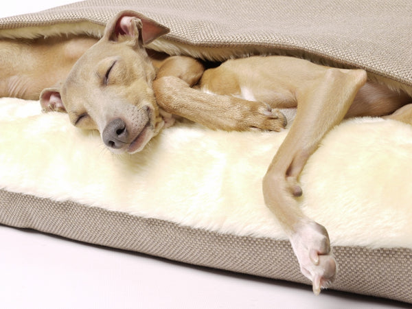 Charley Chau Snuggle Bed - Italian Greyhound