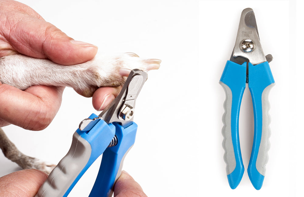 Clipping a dog's nails with scissor action dog nail clippers