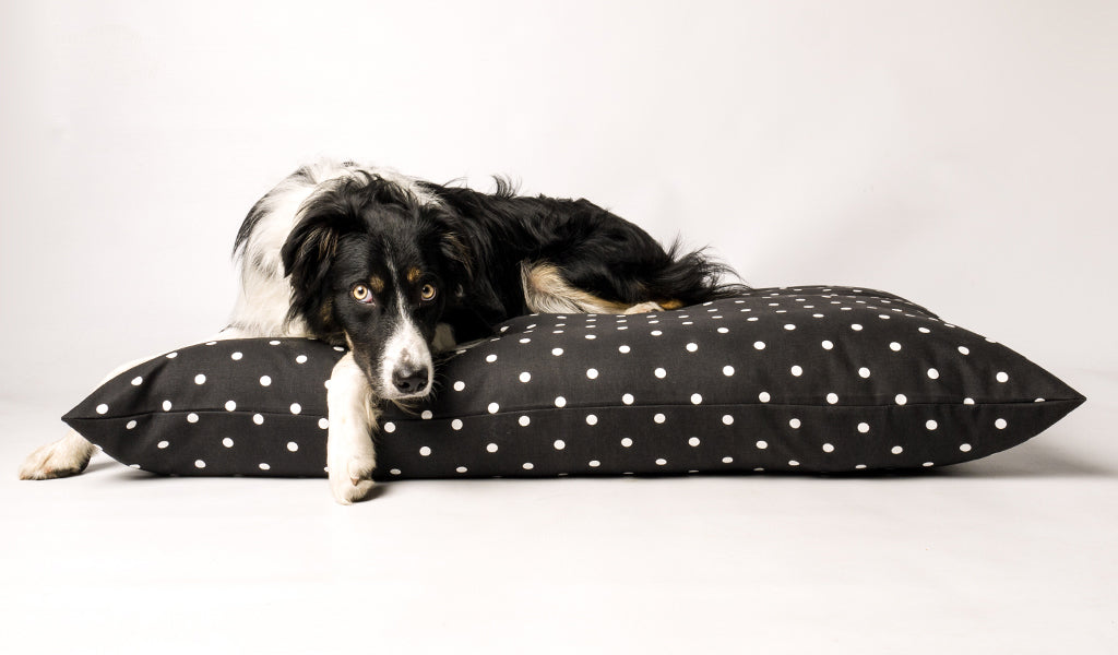 Spotty Dog Bed by Charley Chau supplied to ITV Flockstars