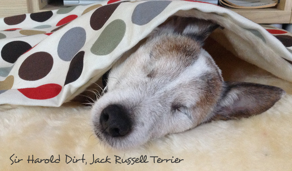 Jack Russell Terrier Tunnel Bed by Charley Chau