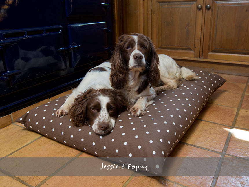 Jessie & Poppy on their Day Bed in Dotty Chocolate