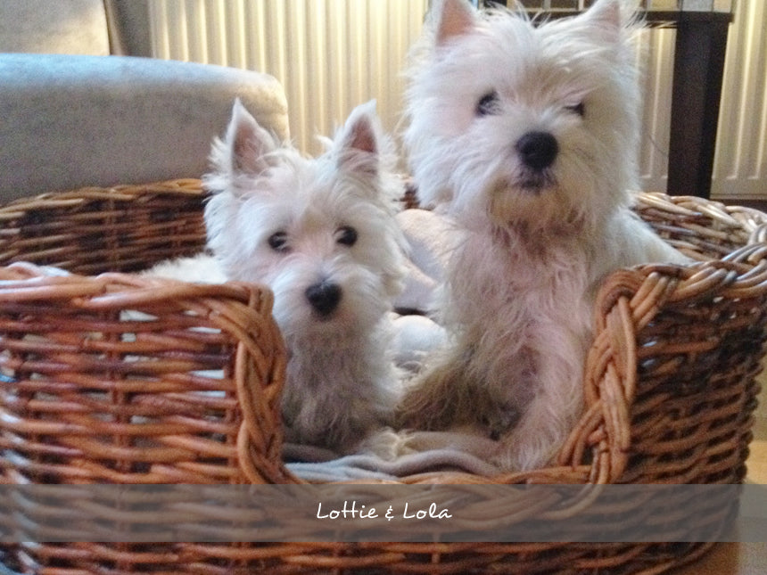 Lottie & Lola in their Oval Rattan Dog Basket in a Natural finish