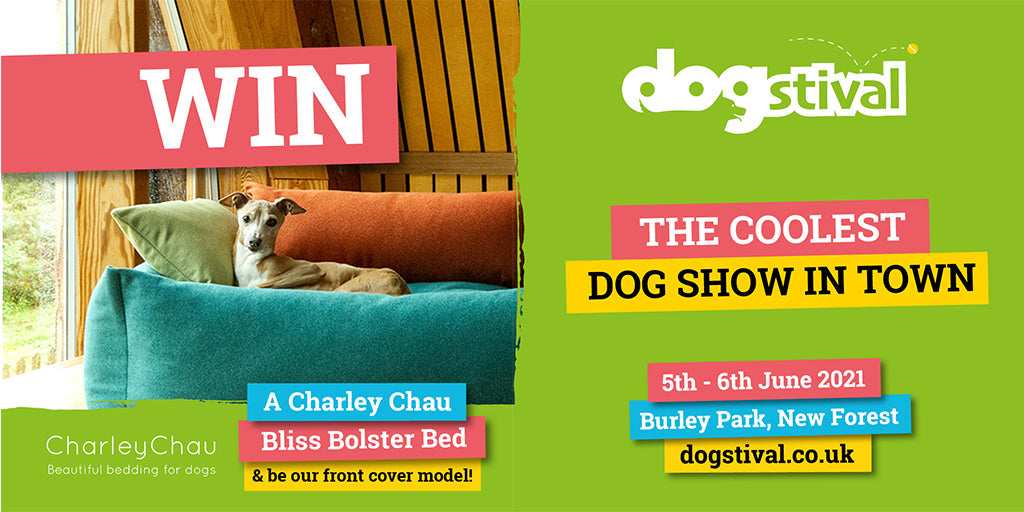 The Face of Dogstival
