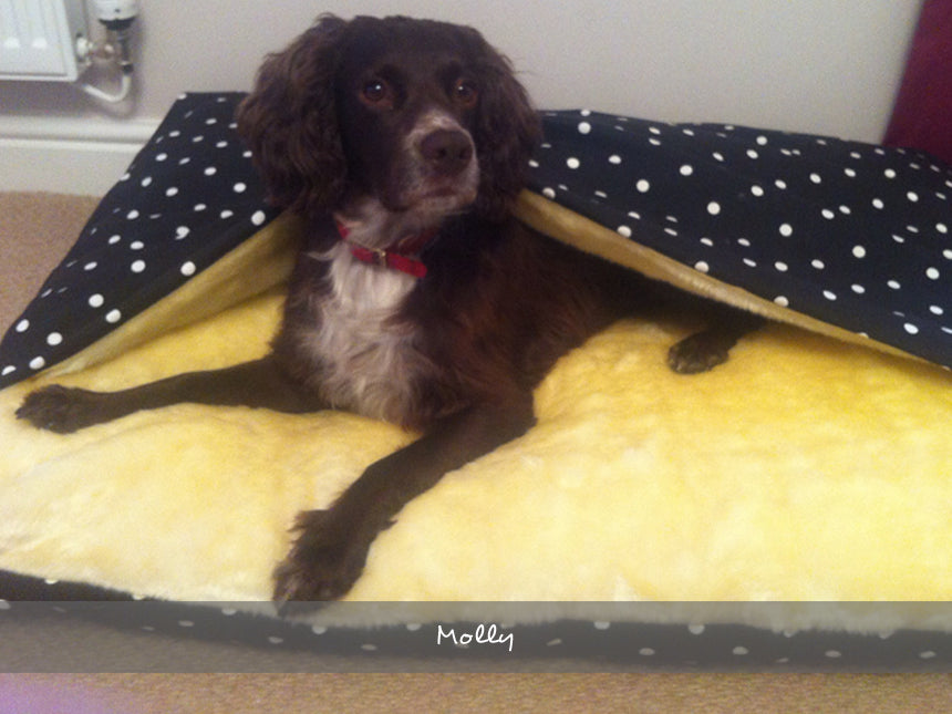 Molly in her Snuggle Bed in Dotty Charcoal