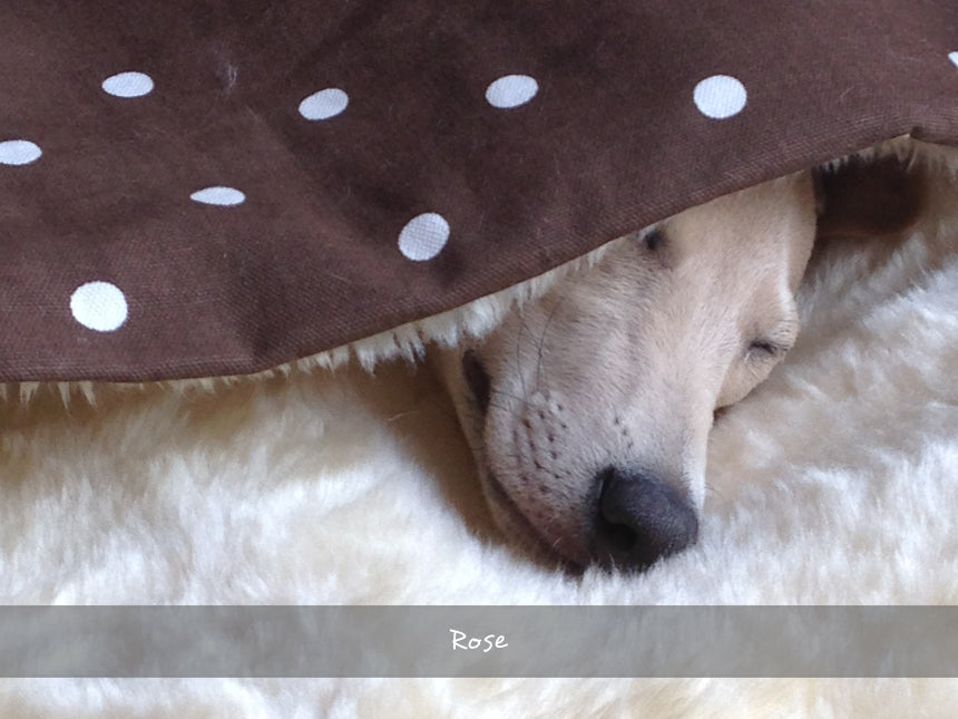 Rose in her Snuggle Bed in Dotty Chocolate