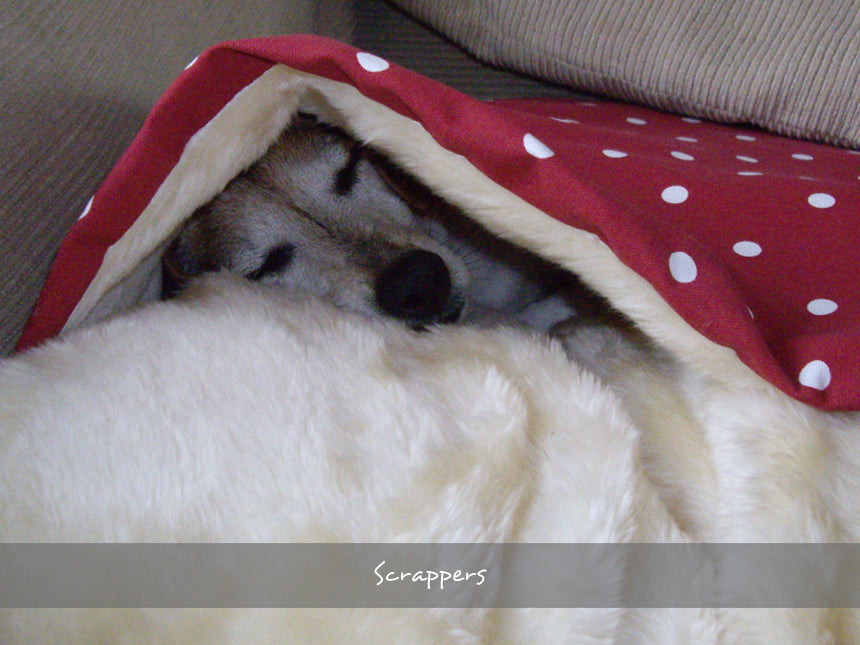 Scrappers in his Snuggle Bed in Dotty Red Raspberry