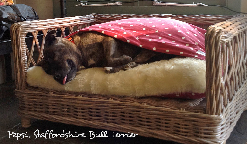 Staffordshire Bull Terrier Tunnel Bed by Charley Chau