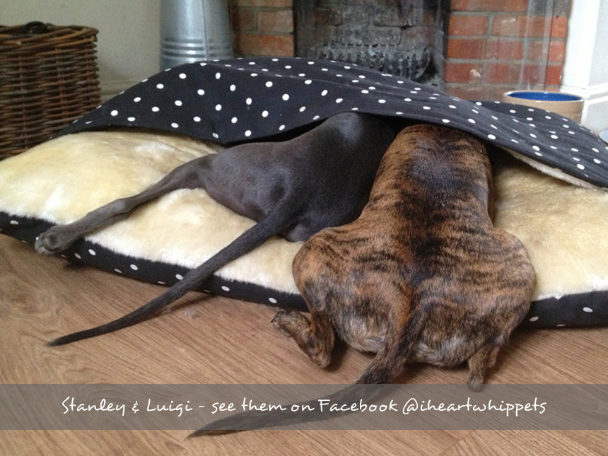 Stanley & Luigi in their Snuggle Bed in Dotty Charcoal