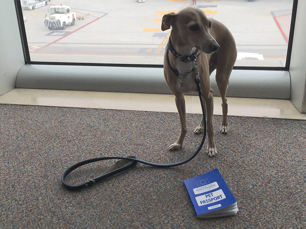 Theo with his pet passport ready to travel!