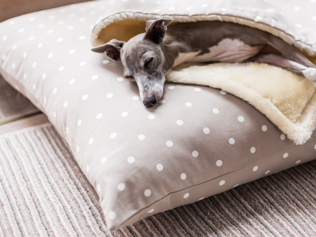 Luxury Dog Bed Mattress - Day Bed in Dotty Taupe