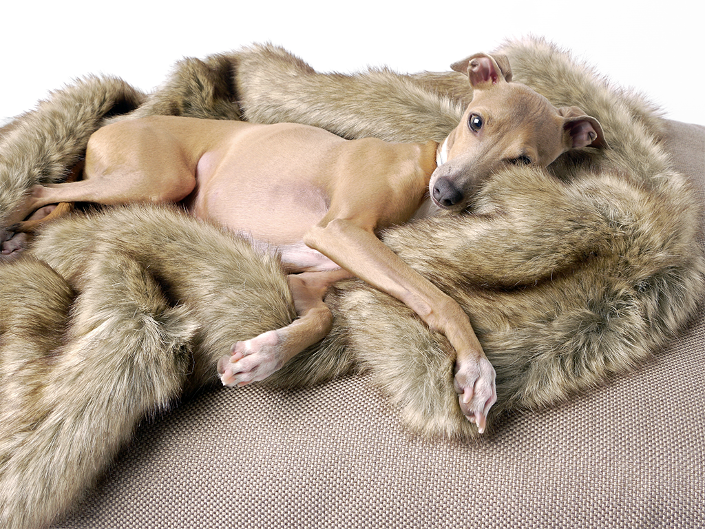 'Foxy' Faux-Fur Dog Blanket