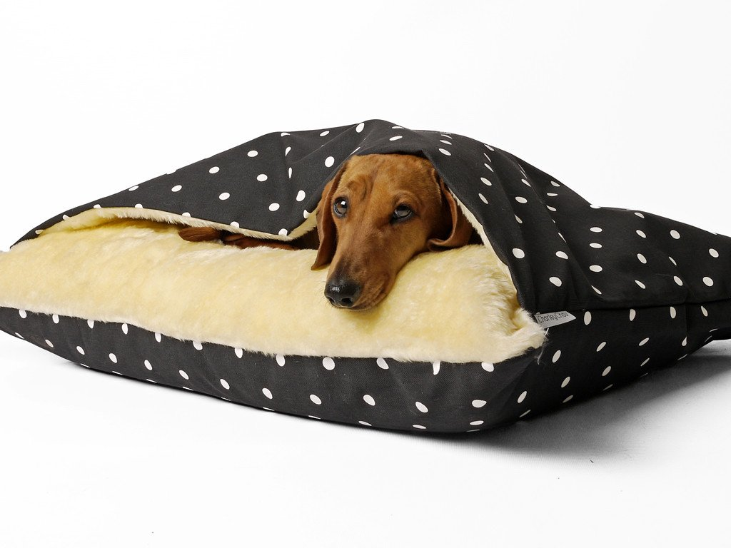 Dachshunds love to burrow!
